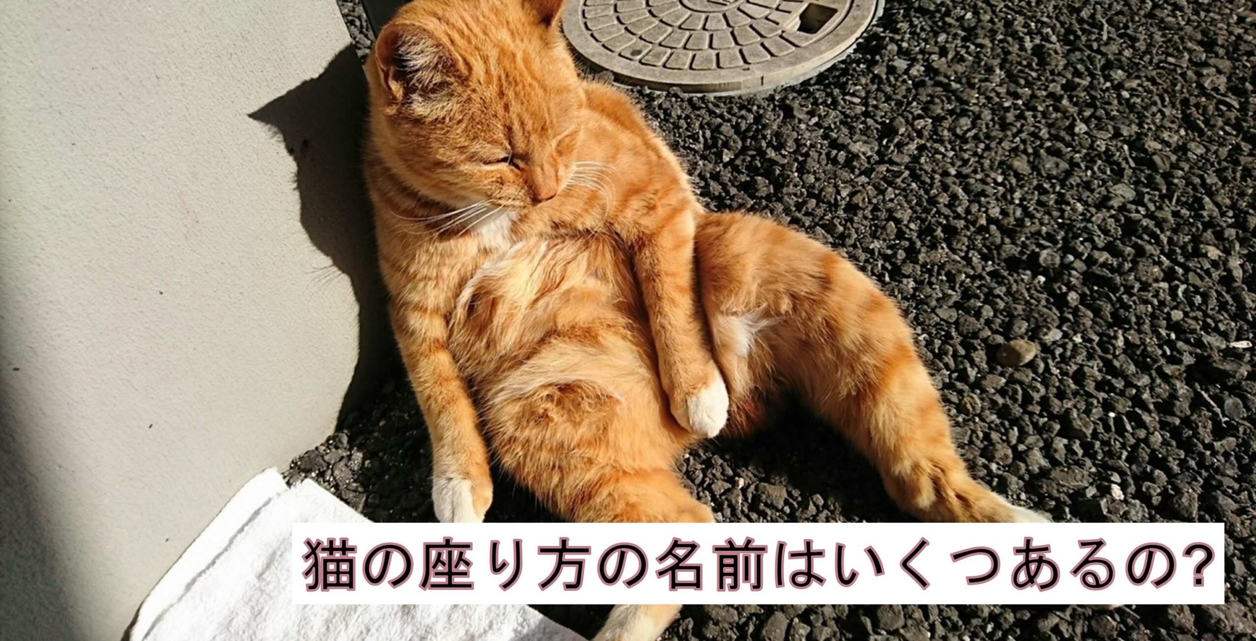 猫の座り方